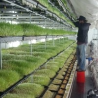 Sustainable Livestock Feed- Energy  & Nutrition