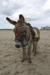 farm animal donkey