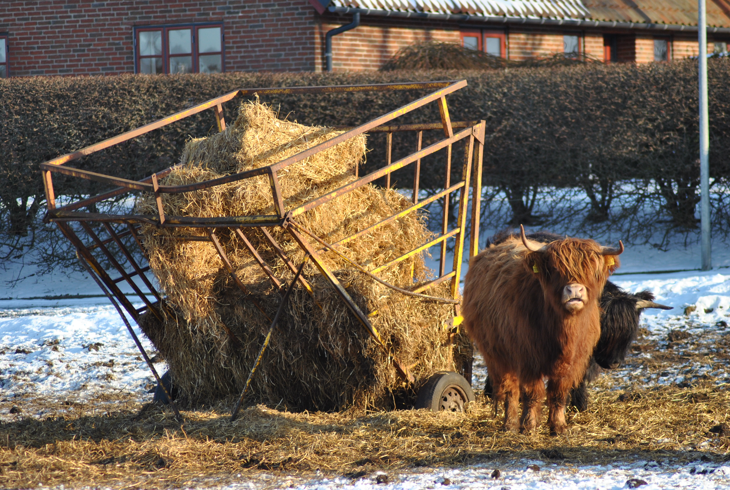 Interesting Farm Animal Fun Facts That You Should Know