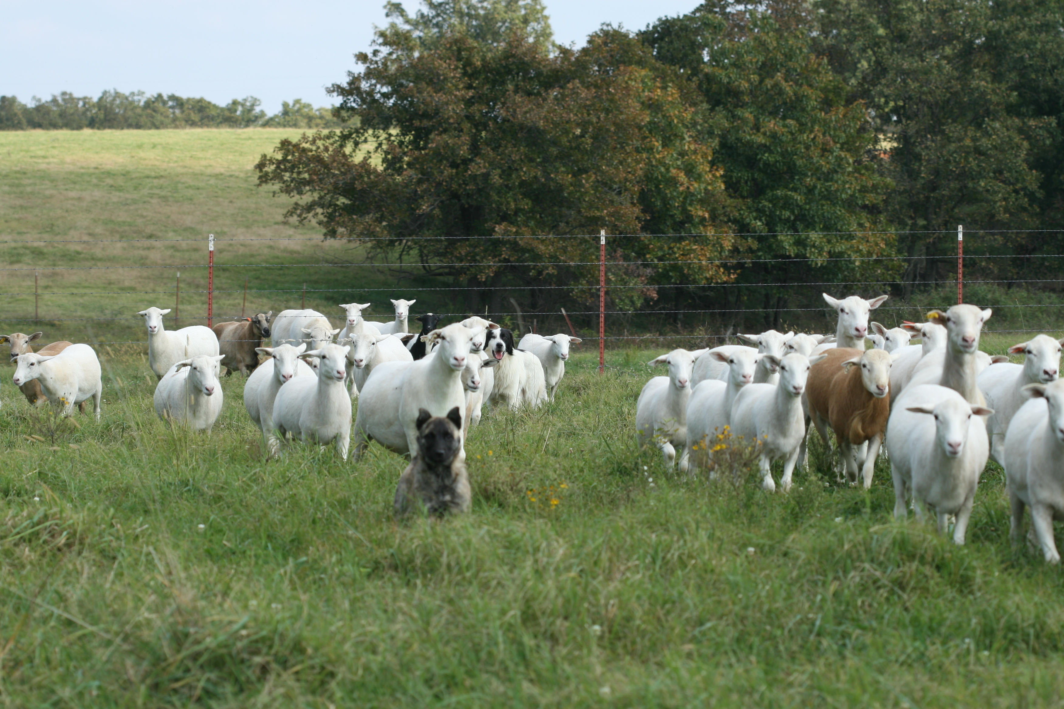 Sustainable Livestock Nutrition & Management Tools
