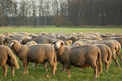 New Year's Resolution Animal Welfare & Farm Animal Care All Year Long