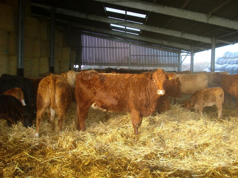 Tips for Livestock Health Care in Spring