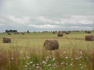 farm pasture