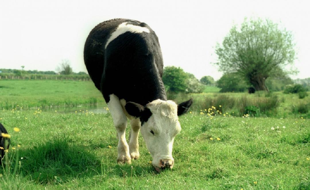 Livestock Farming – Challenges & Concerns During Spring