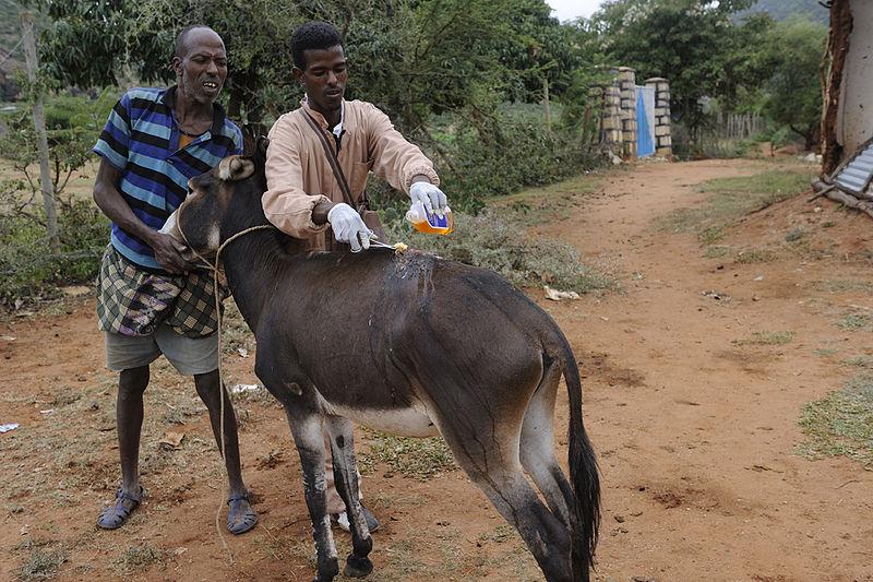 800px-Veterinary_Outreach_Hawaye_Kebele_Ethiopia