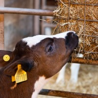 Steps You Should Take for Sustainable Livestock Production