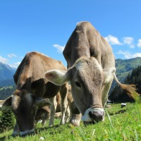 Get your Pastures Ready for Spring Grazing