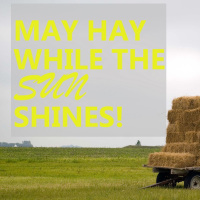Make Hay While Sun Shines – Hay Silage & Animal Feed