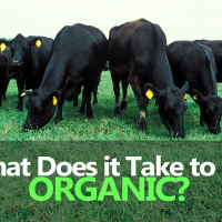 Organic Livestock Nutrition – Feeding, Health & Nutrition of Organic Farms