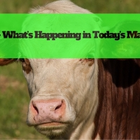 Beef – What's Happening in Today's Market?