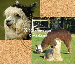 Suri and Huacaya alpacas