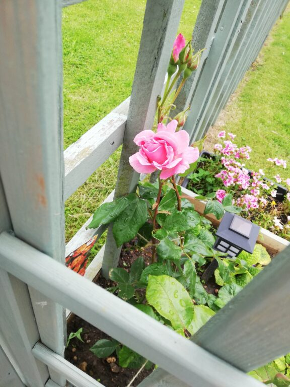 Reclaimed wood planter box with pink flower.