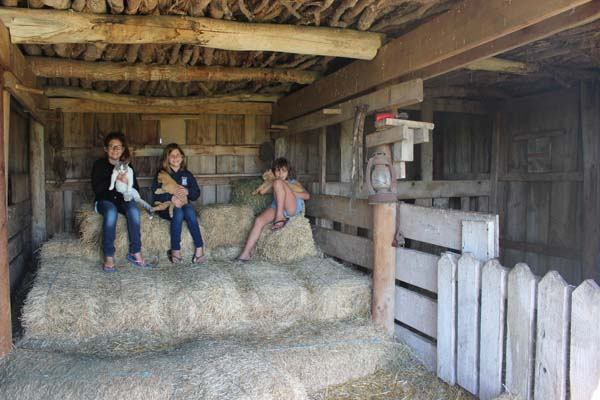 The Homestead barn - with kittens to boot!
