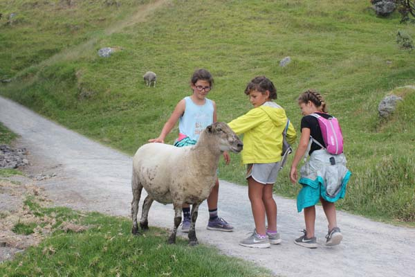 "Crazy Sheep we encountered on our ""walk"" aka hike."
