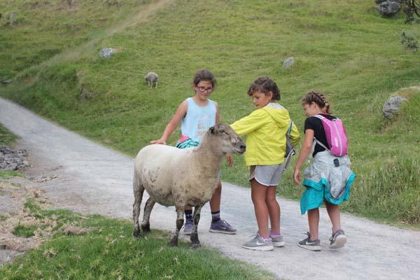 "Crazy Sheep we encountered on our ""walk"" aka hike."