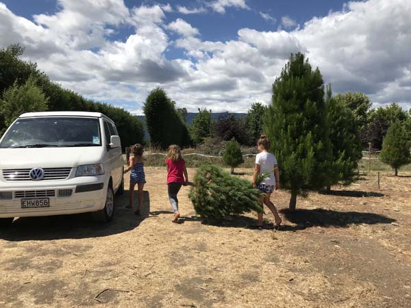 Picking a Christmas Tree from the Christmas Tree farm!
