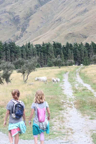 Hiking with sheep...