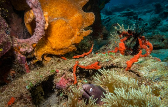 LLV Divers Lalaguna Villas