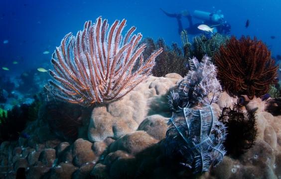 Verde Island LLV Divers