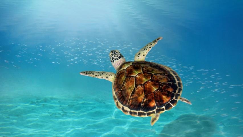 Epidemic a Benefit to Marine Life