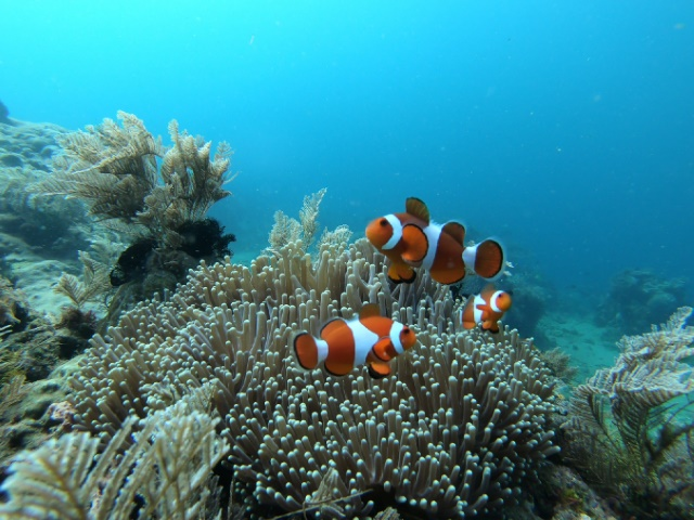 Anilao with LLV Divers
