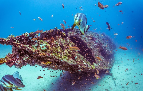 Verde-Island-Diving-with-LLV-Divers