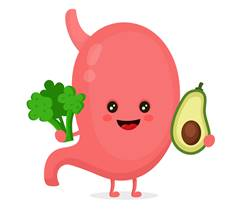 Secret of Aging Healthy Gut