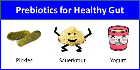 Secret of Aging Prebiotics for Healthy Gut
