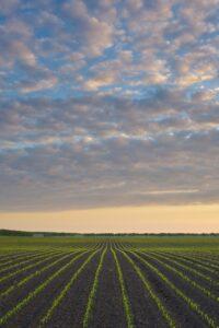 Steve Kluemper Corn Field