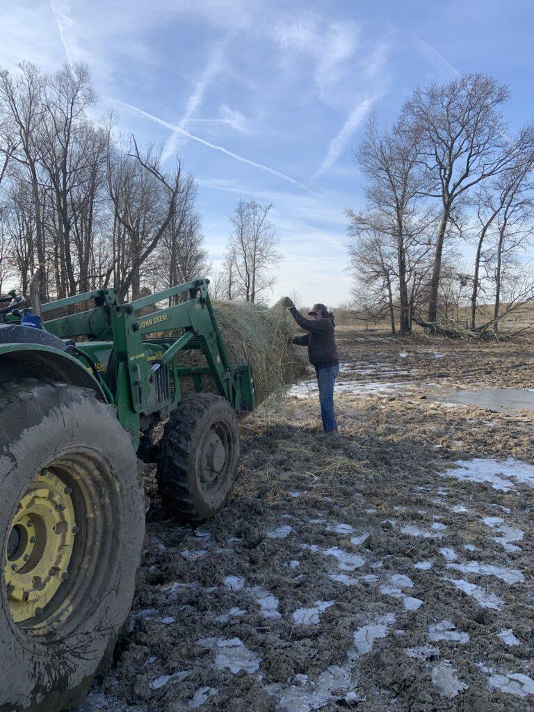 Steve Kluemper feeding hay with his Dad