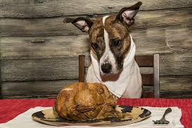 turkey napkin dog