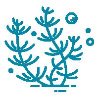algae icon