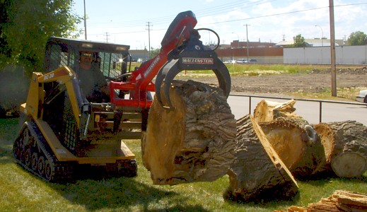 Tree & Stump Removal