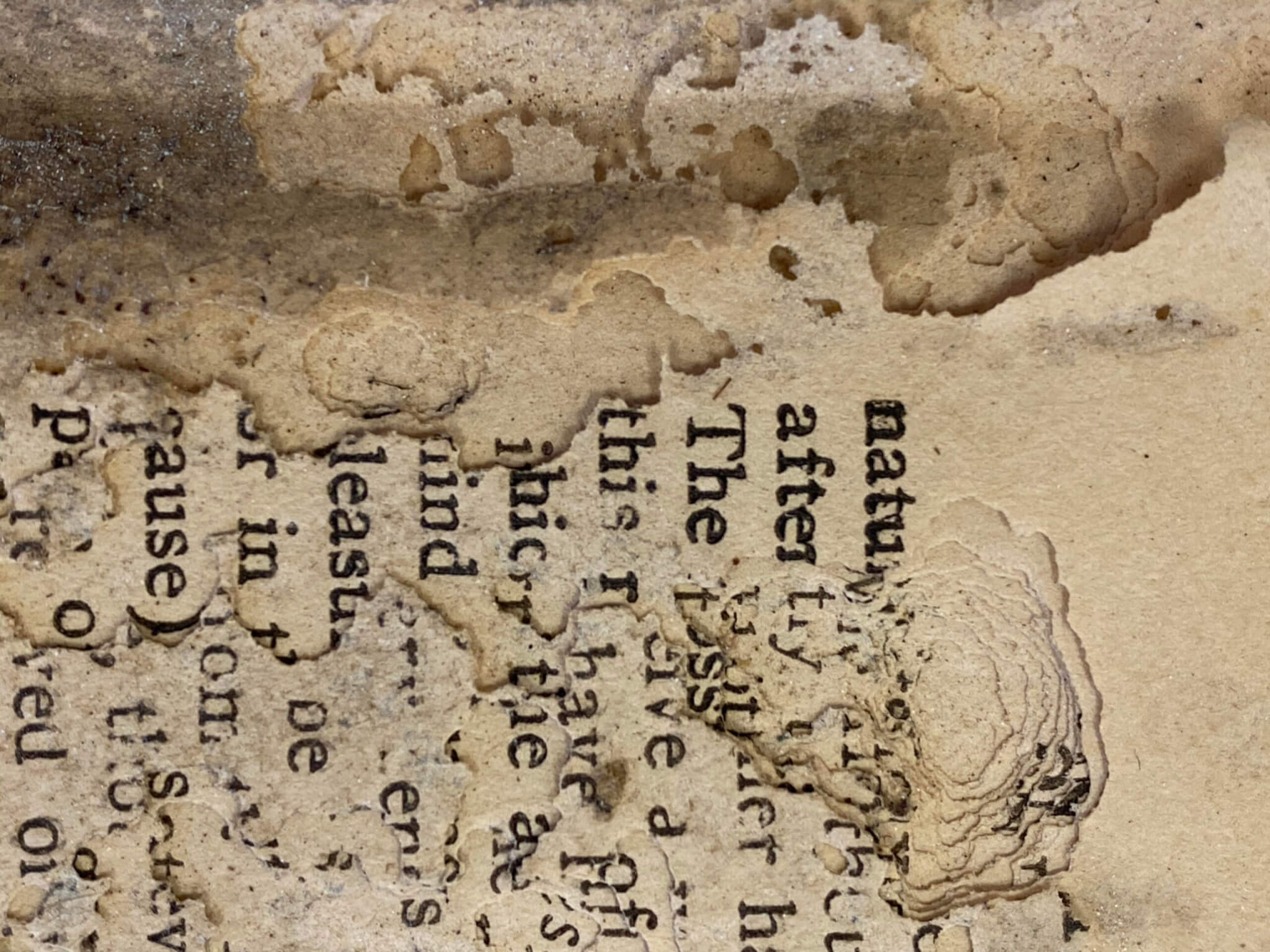 Bookworms insect damage book conservation fine art disaster response antique restoration insect infestation book worms