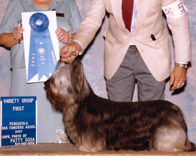 Ch Gold Coast Dutch Boy In The Paint #2  – Dutch getting one of his many Group Wins.