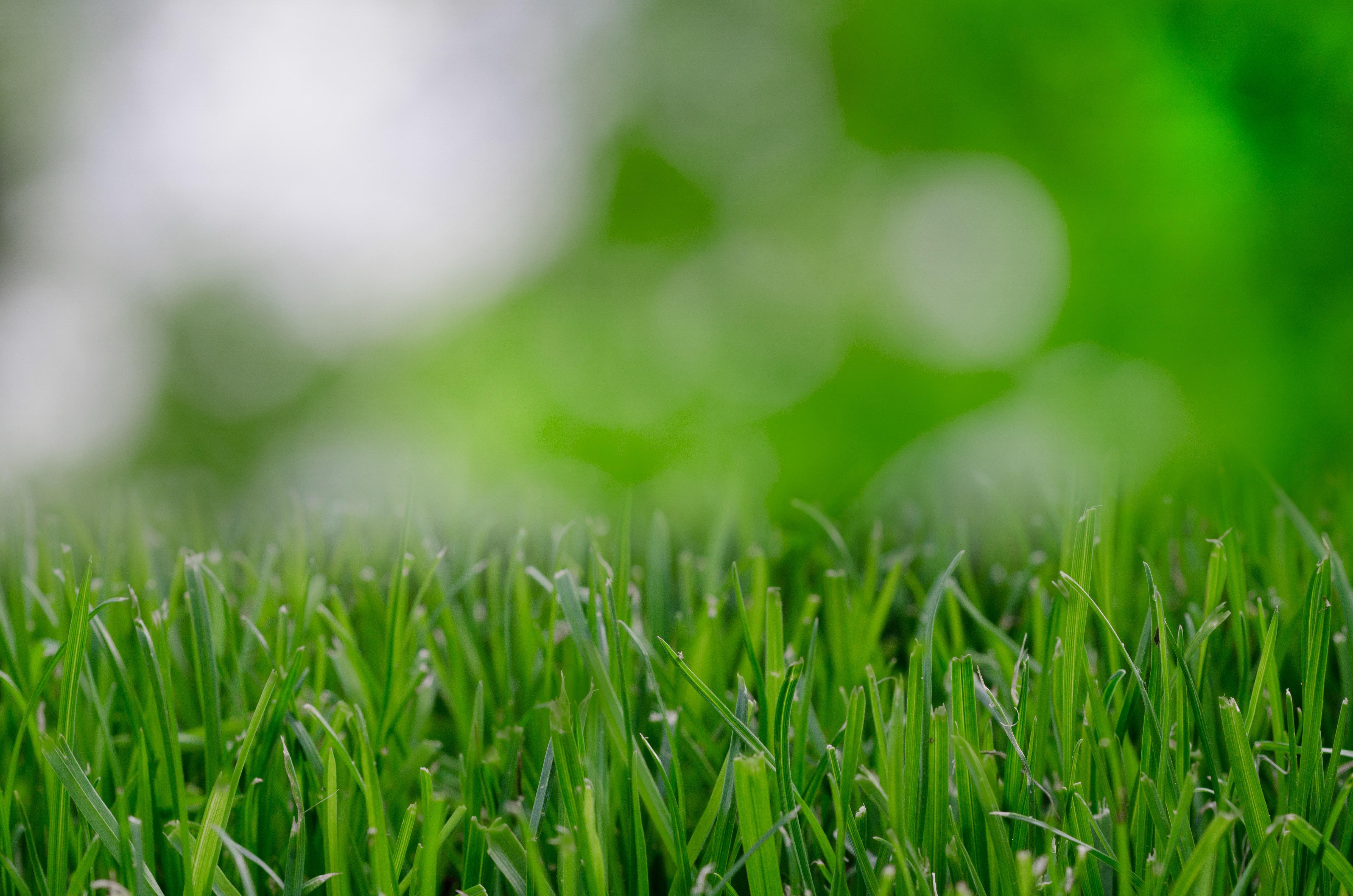 nature-garden-grass-lawn-9257