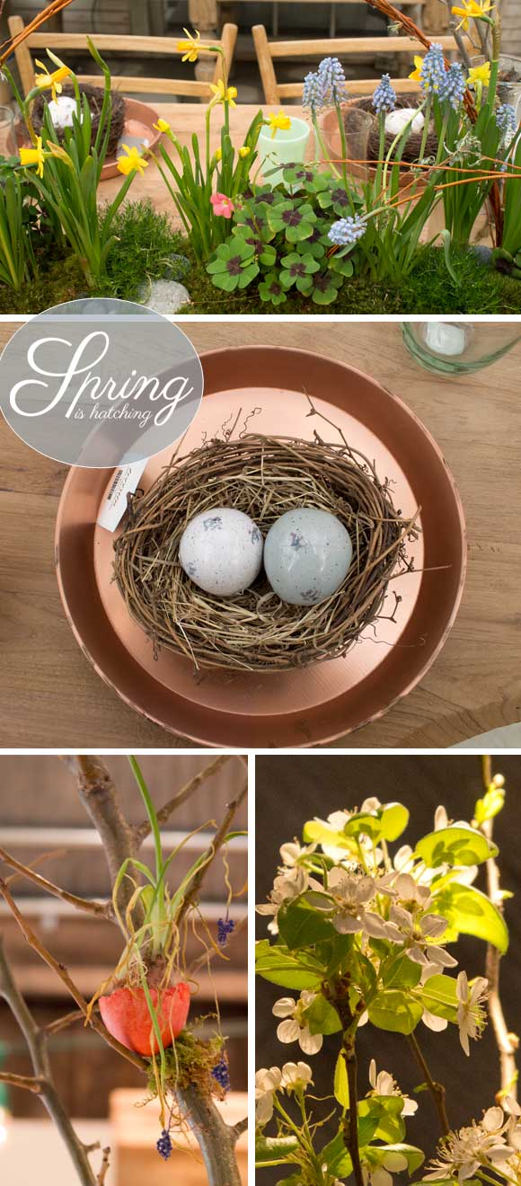 Spring is Hatching