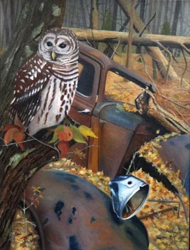 Barred Owl - Oil on Canvas by William C. Turner