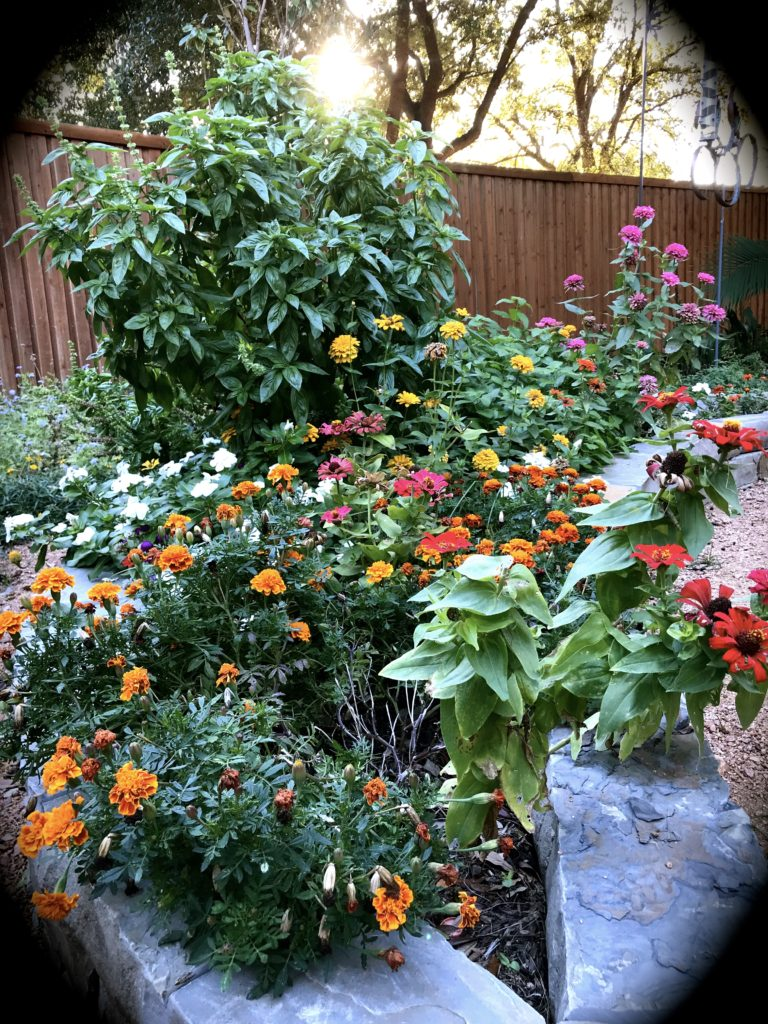 flower and basil vignet