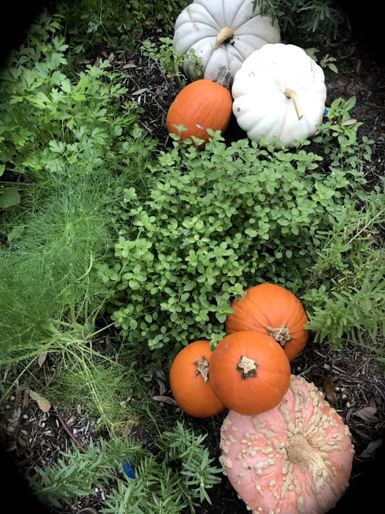herbs and pumpkins