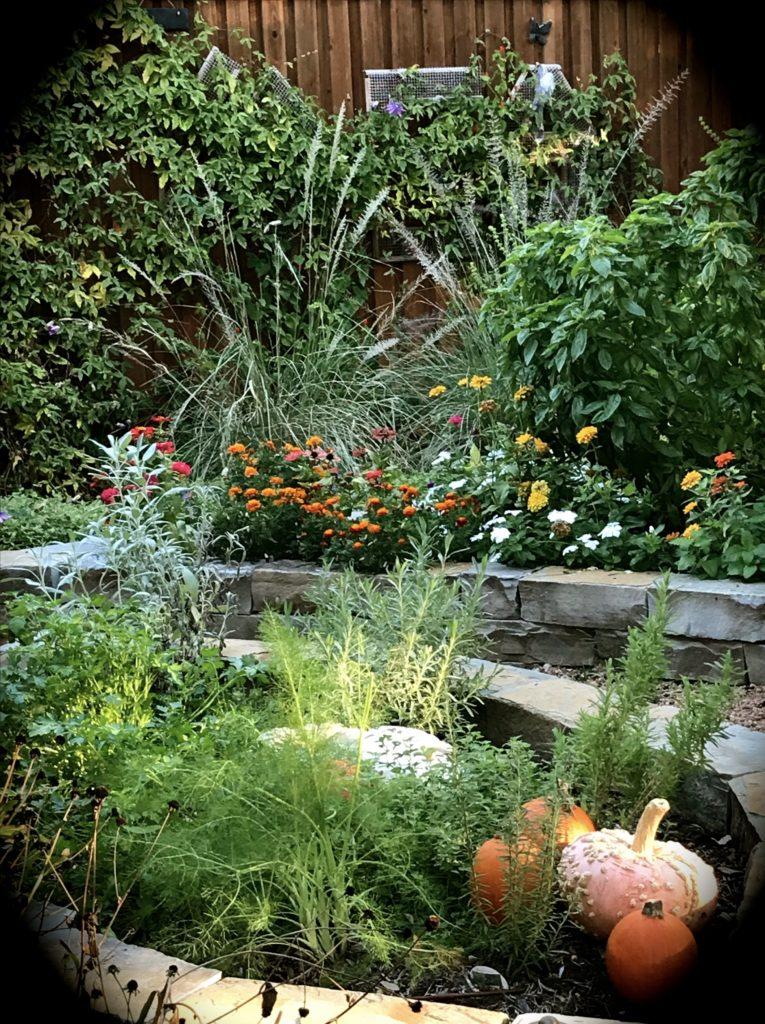 Garden 10/17