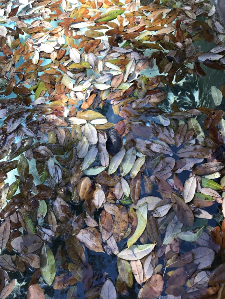 Pool leaves