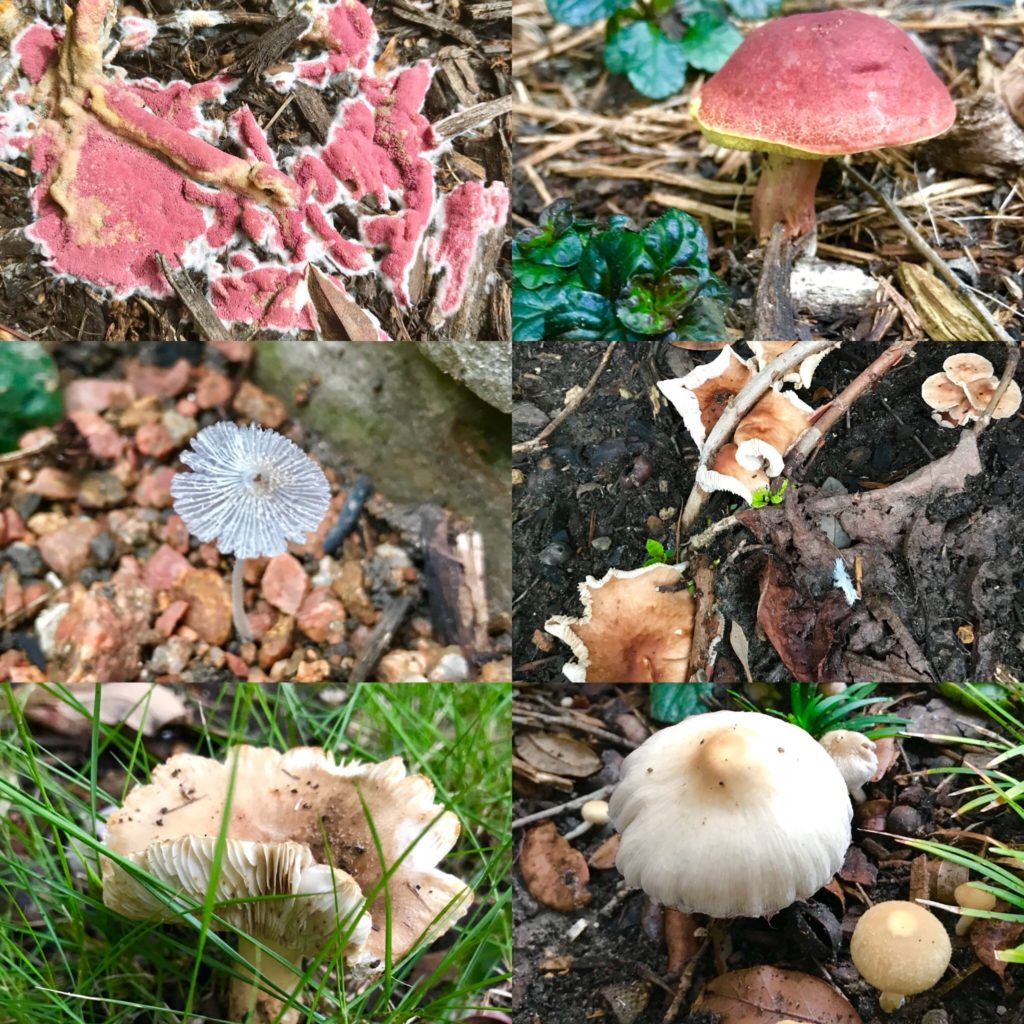 Shrooms in the yard!