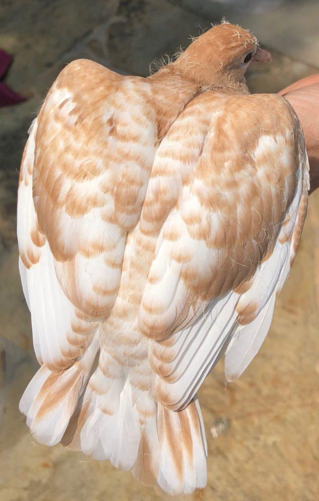 Dove beauty