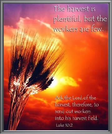 harvest-plenty