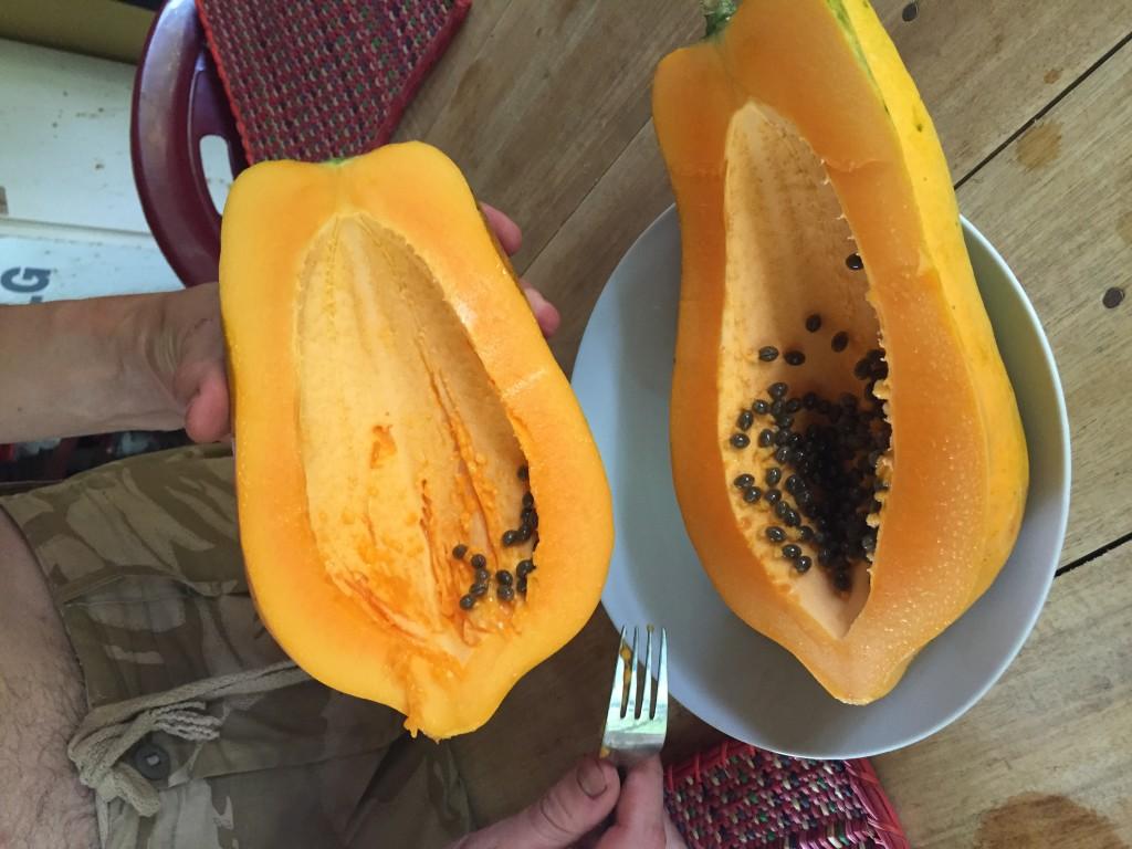 fresh papaya from the trees