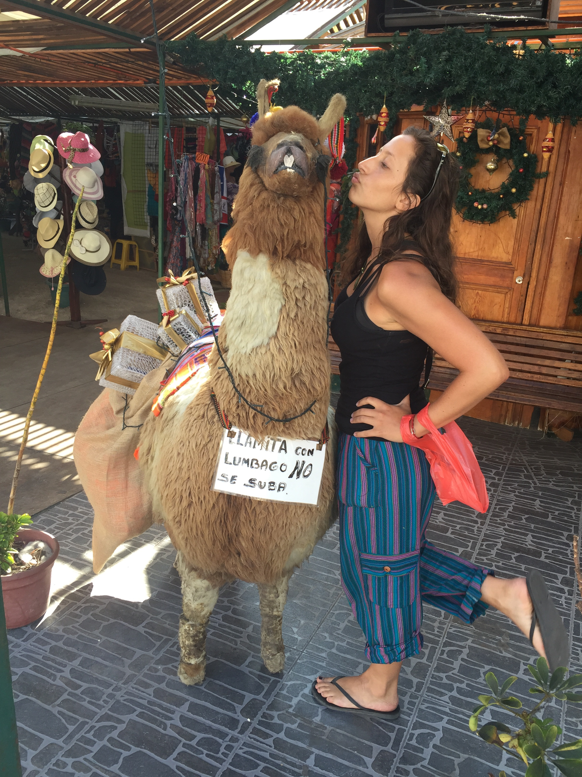 Llamas in Chile are like cows in the US