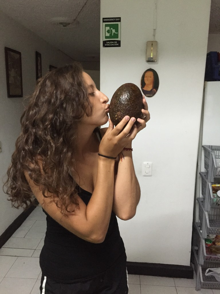 Large avocados found in Medellin, Colombia