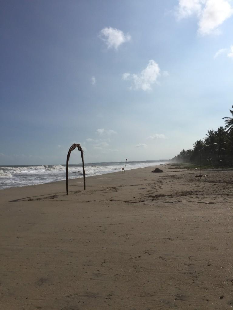 beach in palomino