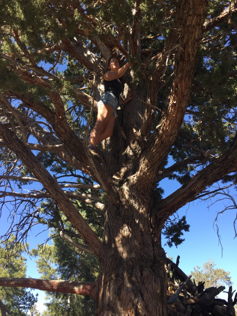 plenty of nice trees to climb on the Cougar Crest Trail in Big Bear Lake, California